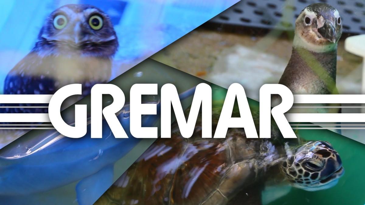 Instituto Gremar no Guarujá e reabilitação de animais feridos